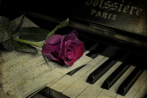 piano rose flower vintage notes HD wallpaper