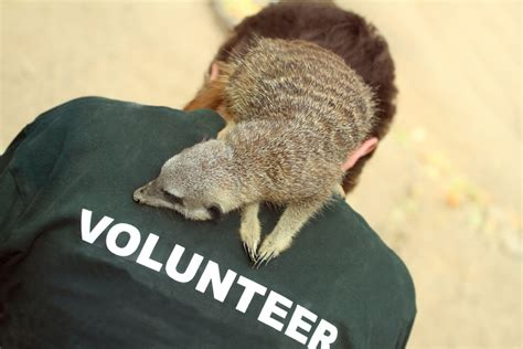 Voluntary Work With Animals and Wildlife Charities