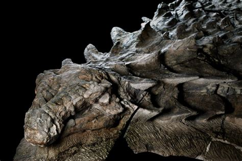 The world's best-preserved dinosaur is now on display in
