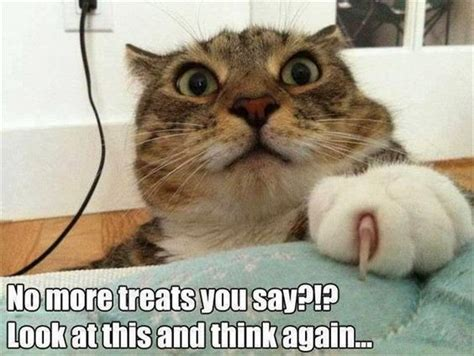9 Crazy Cats That Will Make You Laugh