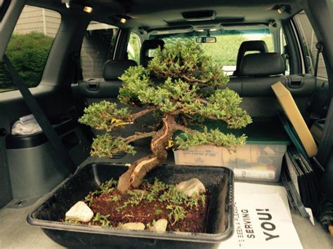 Expensive bonsai stolen from Federal Way museum recovered
