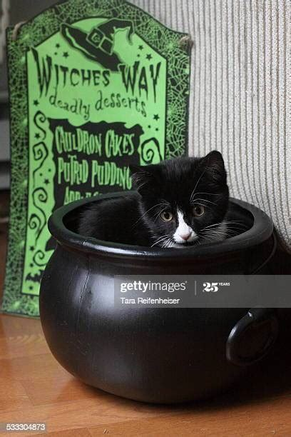 Caldron Stock Photos and Pictures | Getty Images