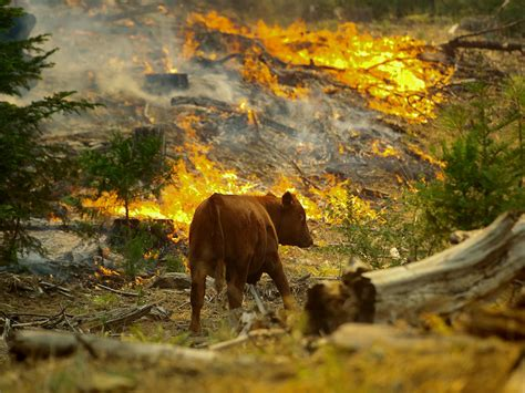 How Animals Are Coping with California's Wildfires